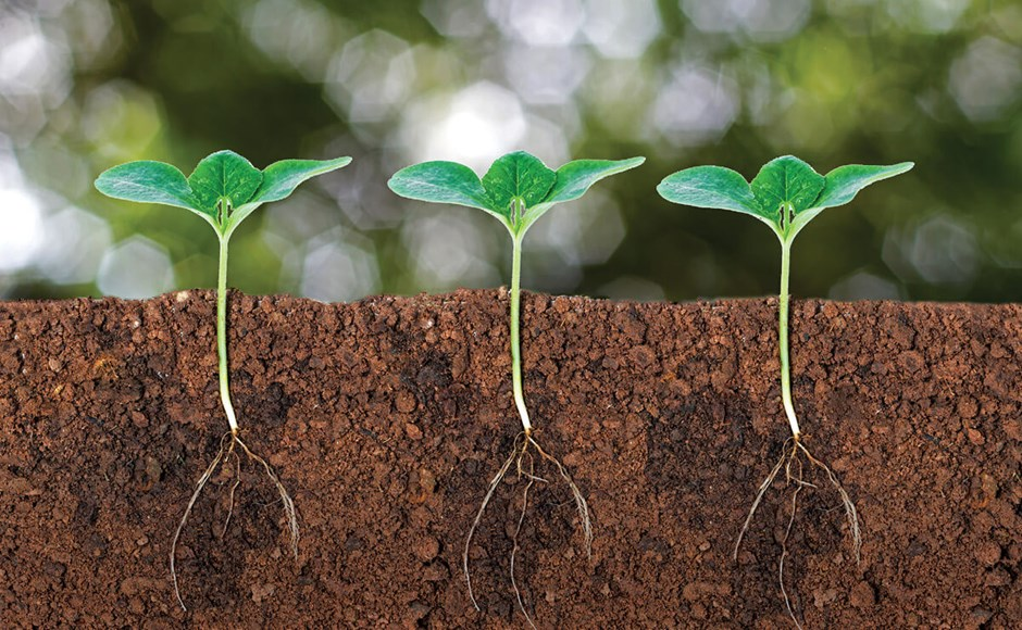 Strengthening Plant Roots with Phosphorus and Potassium