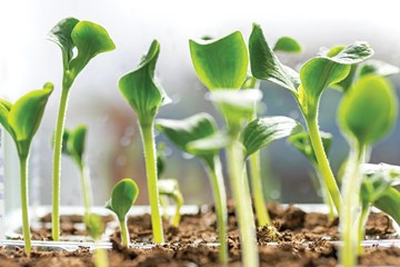 Knowing When to Start Seedlings on Fertilizer and Nutrients