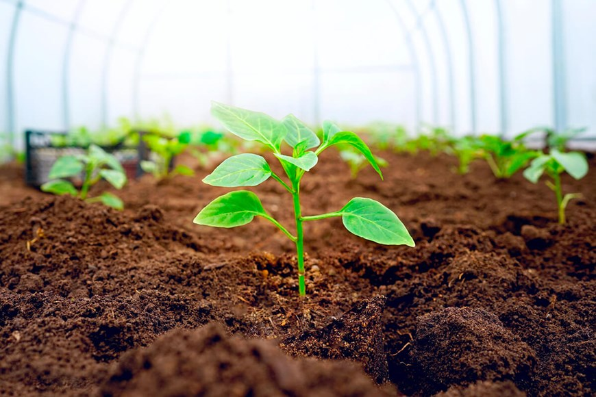 The Comfort Zone: Fostering Healthy Bacteria in the Greenhouse