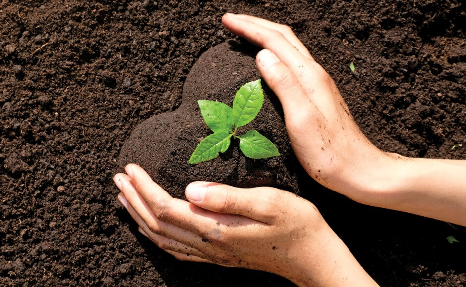 Hands cupping soil around a plant into the shape of a heart.
