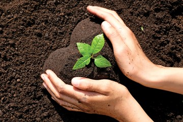 The Importance of Good Soil Health