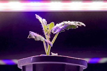 The Light That Binds: Lighting for Young Plants