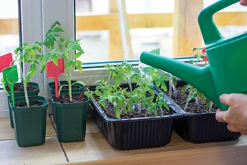 Starting Plants Indoors for Outdoor Growing