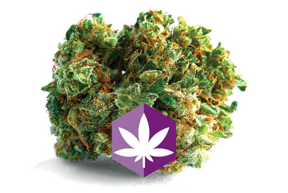 Cut & Dried Strain Review: Mellow Out with Souris Skies (Sensi Star)