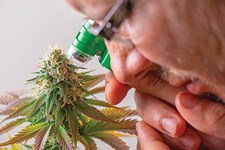 Terpene Analysis: A Higher Level of Cannabis Quality