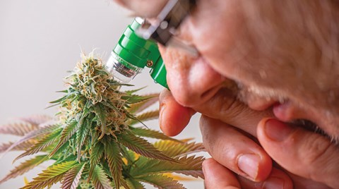 Chris Bond explores some of the methods being used to ensure cannabis products on the market meet expectations.