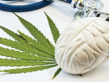 A model of a human brain next to cannabis leaves and a stethoscope.
