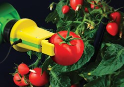Automation Must-Haves for New Growers