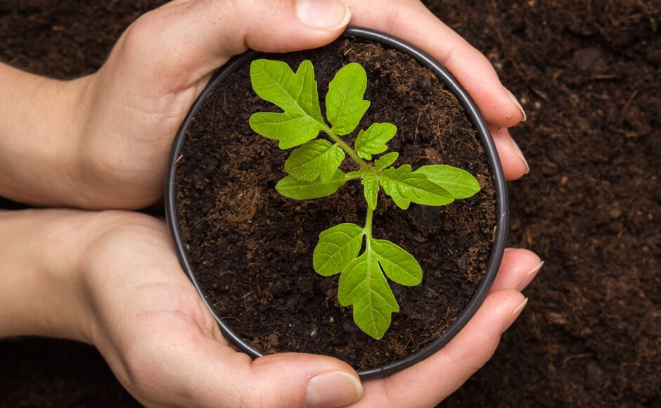 Growing 101: Perfect Potting Mixes for Container Gardening