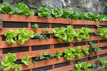 Adventures In Vertical Gardening