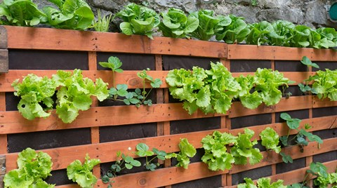 If you can't grow across due to a lack of space, try growing up. Vertical gardens are easy to set up and maintain just by applying the...