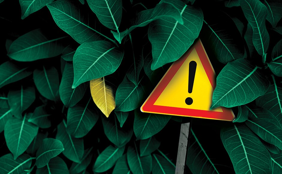 A yellow yield sign in a hedge of green leaves.