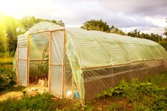 Greenhouse in the Summer climate