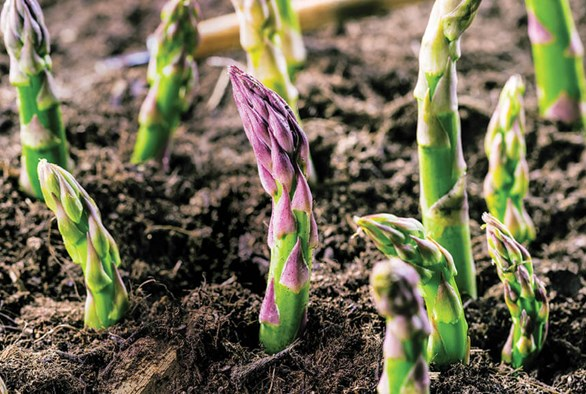 How to Boost Living Soil with Organic Amendments
