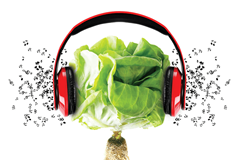 Music and plants