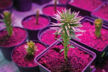 Plant Growth and the Light Spectrum