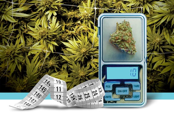 Calculating Cannabis Yields