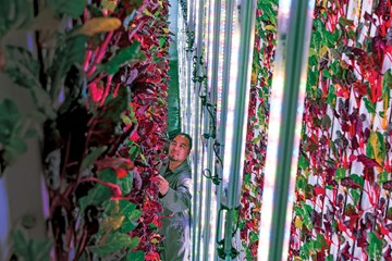 The 10 Biggest and Best Vertical Farms