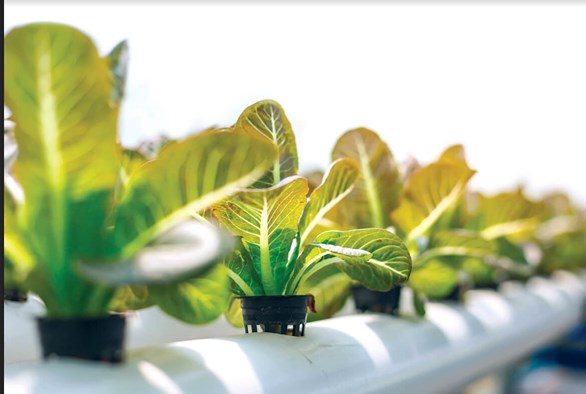 10 Frequently Asked Questions in the Hydroponics Shop