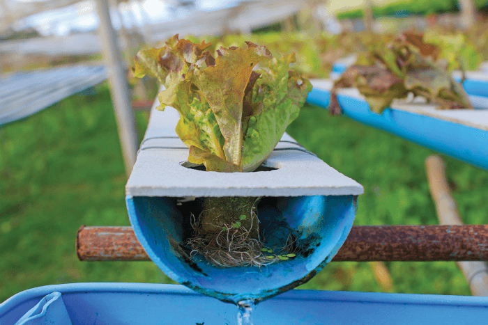 the advantages of using the hydroponic system The growing on deep water creates many food safety advantages  food safety: in the hydroponics system the use of pesticides can be limited, because the.