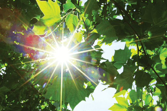 Photosynthesis: The Power of Light