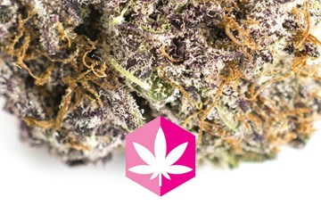 Strain Review: Pink Kush