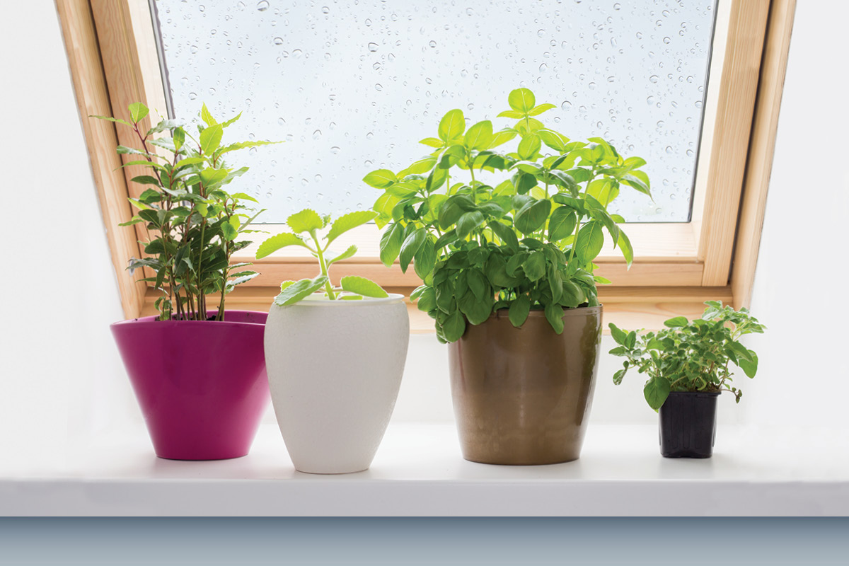 Tips for starting a windowsill garden - Fight weeds with organic solutions practical tips in the garden ...