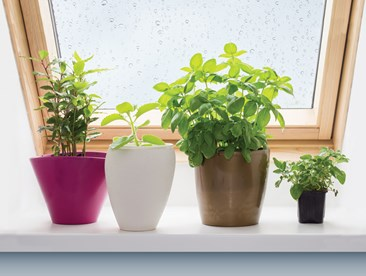 Tips for Starting a Windowsill Garden