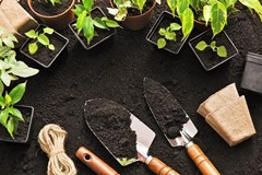 What Makes Healthy Soil?