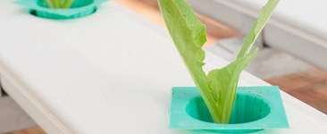 How to Start Your First Hydroponic Garden: A Guide for Beginners