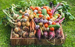 10 Helpful Post-Harvest Hints