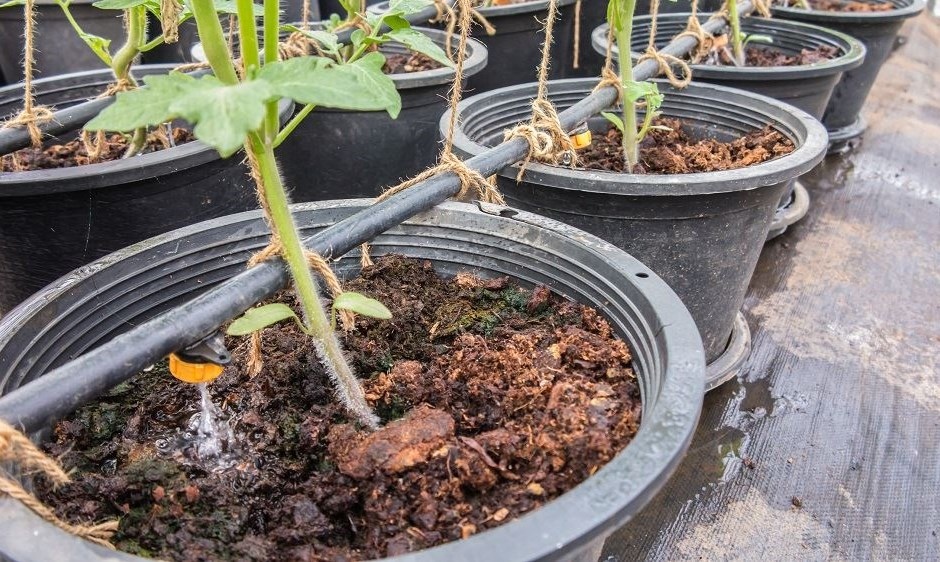 Top Growing Media Options for Containers