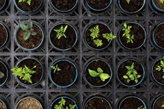 The Subtle Art of Hardening Off Your Seedlings