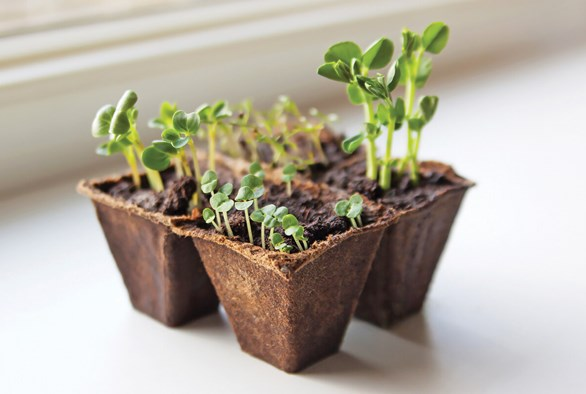 Caring for Delicate Pre-Veg Seedlings