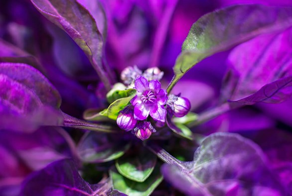10 Things You Must Look For When Choosing LED Grow Lights