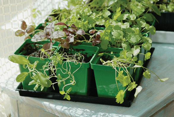 Same but Different: Indoor vs. Outdoor Nutrients