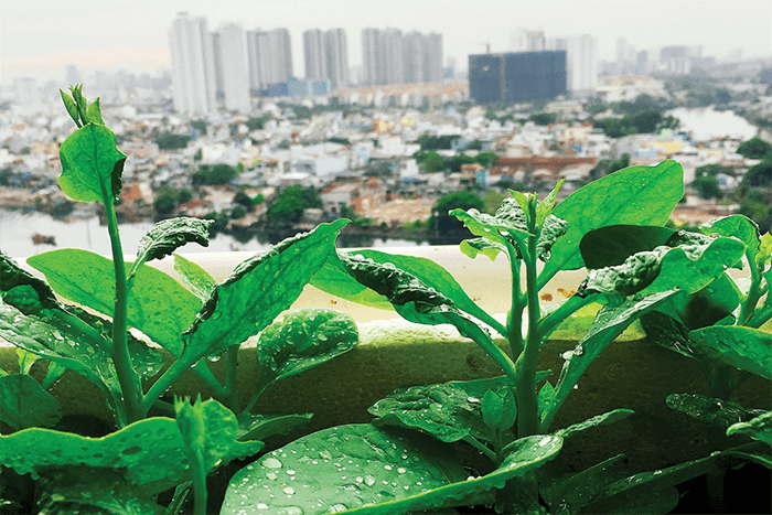 What To Plant On A Rooftop Garden