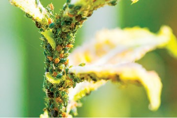Sick Plants: Getting the Diagnosis Right