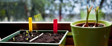 Plants Know Best: Life Force and the Garden