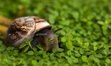 Dealing With Pesky Garden Pests: Snails and Slugs