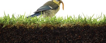 The Soil Food Web: How to Build Healthy Soil