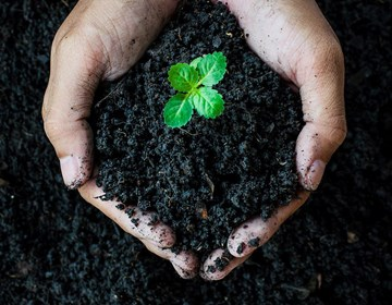 Build the Best Organic Soil for Your Growroom