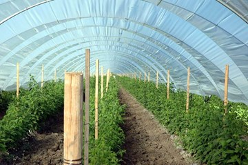 Greenhouse Planning: What Growers Need to Know
