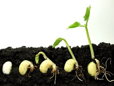 A Plant's Life - From Seed to Seed Producer