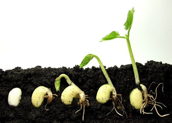 Germinating Seeds and Caring for Seedlings