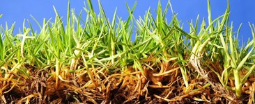 What Mycorrhizae Can Do For You