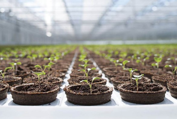 3 Ways to Take Your Grow to the Next Level