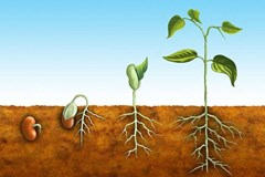 Understanding Microbial Activity in Plant Rooting Media