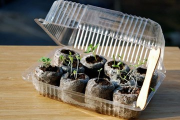 Reap What You Sow: Beginning Your Crop from Seeds