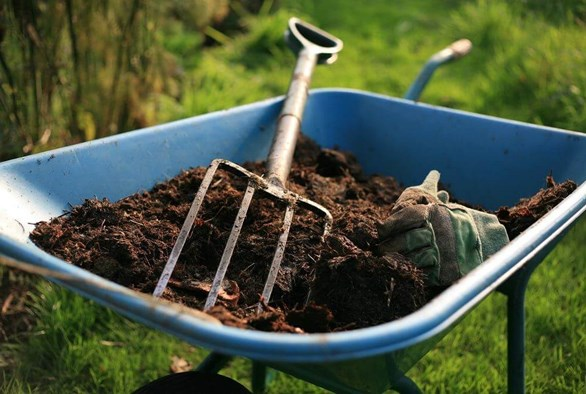 Care for a Cup of Compost Tea? Your Plants Will!